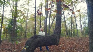 Download If You Find A Bent Tree In The Forest, You May Have Just Stumbled Upon A Centuries Old Secret Video