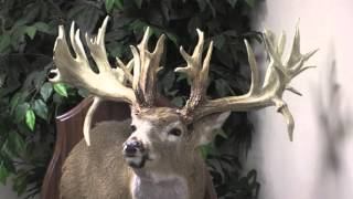 Download The Mike Beatty Buck Video