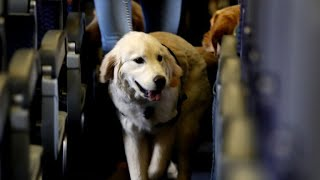 Download New airline regulations on service dogs Video