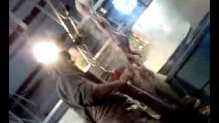 Download El mata conejos Video