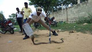 Download Sagar snake society Telangana Video