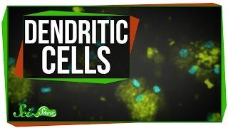 Download Dendritic Cells: Scishow Talk Show Video