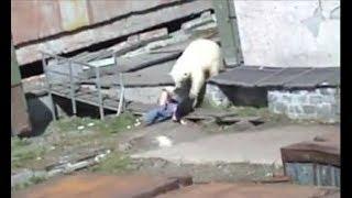 Download When Wild Animals Attack Video