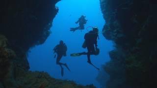 Download Dakuwaqa's Garden - Underwater footage from Fiji & Tonga Video