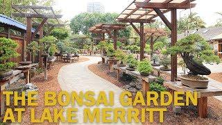 Download Bonsai Gardens : The Bonsai Garden at Lake Merritt Video