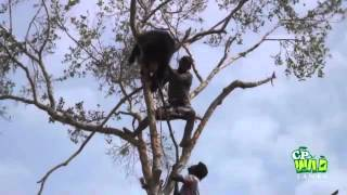 Download This Bear was caught by a trap ! Video