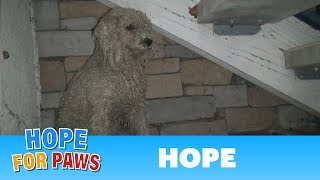 Download TBT: Homeless poodle needed help, but was too scared to ask. Watch the amazing transformation :-) Video