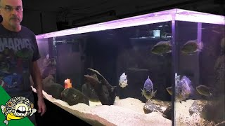 Download Fish Room Tour - 1000 Gallon Aquarium, Central and South American Cichlids. Dovii Cichlid, Midas Video