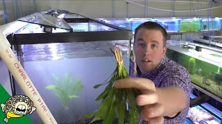 Download Discus Fish Tank Setup Daily Dose #12 Video