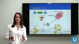 Download CAR T at UCLA: Driving the Progress of Engineered Cell Therapy | UCLA Health Video