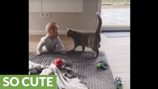 Download Gentle kitty lovingly embraces baby boy Video