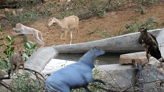 Download #226 Save wild animals ,they are in problems this jungle 'full HD' Video