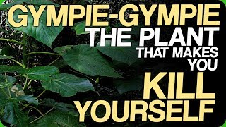Download Gympie-Gympie - The Plant That Makes You Kill Yourself (Our Most Painful Experiences) Video