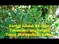 Download 10 JENIS TANAMAN YANG BERNILAI TINGGI JIKA DIJADIKAN BONSAI Video