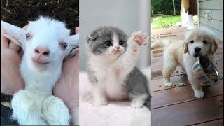 Download Cute baby animals Videos Compilation cute moment of the animals - Soo Cute! #13 Video