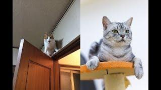 Download やばいくらい高い場所にこだわりを見せる猫ちゃんたちが面白くてかわいい♡~Cute funny favorite cat high places. Video