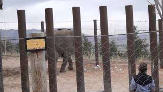 Download Elephant gets upset during training at Cheyenne Mt Video