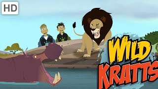 Download Wild Kratts - Top African Wildlife Video