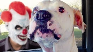 Download Funny Dogs Scared of Masks Compilation Video
