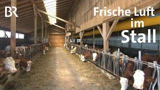 Download Richtige Stallbelüftung: Frischluft im Stall - gesunde Kälber | Unser Land | BR Fernsehen Video