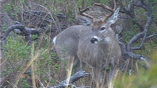 Download Mexico Coues Deer Hunts Video
