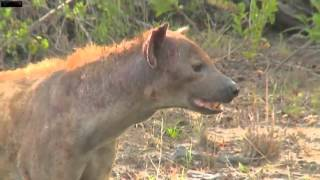 Download Jamie Hyena Drive With Brian on Camera Jan10/2016 Video