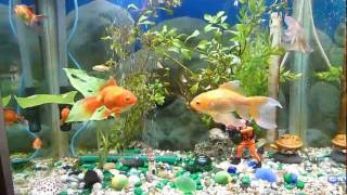 Download Aquarium - Before and after using UV clarifier Video