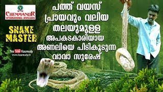Download Wow! Big headed, 10 year old large viper rescued | Vava Suresh | Snakemaster | EP 381 Video