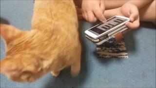 Download 猫がよってくるアプリCat Pianoを試してみた。猫ピアノ(funny cat) Video
