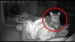 Download Man Sets Up Secret Camera To Record What His Cat Does At Night And It's Hilarious Video