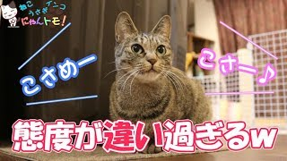Download 飼い主によって態度を変える猫 - Cat changing attitude by owner Video