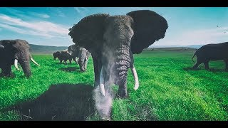 Download Surrounded by Wild Elephants in 4k 360 Video