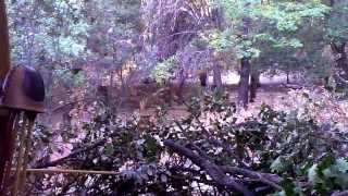 Download Mountain Lion Stalks Unsuspecting Bow Hunter Video