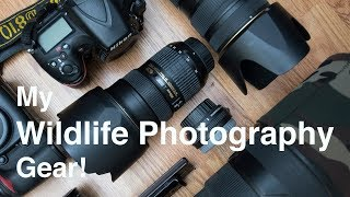 Download What's in my Wildlife Photography Camera bag Video
