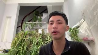 Download Phong lan trầm tím hoa lan giả hạc Vũ 0775614899 phạn văn đồng bình thạnh hcm Video