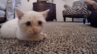 Download Hi, I'm Lazarus the Frozen Kitten Video