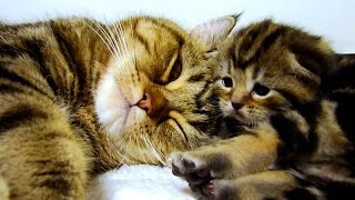 Download Mom Cat Talking to her Cute Meowing Kittens 20 min BONUS Video Video