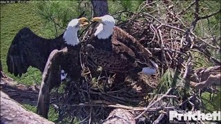 Download SWFL Eagles ~ Lovers Spat 10.9.16 Video