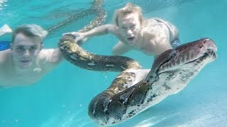 Download GIANT SNAKES in my Pool w/ Jake Paul and Brian Barczyk! Video