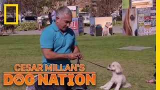 Download Correcting the Nervous Energy | Cesar Millan's Dog Nation Video