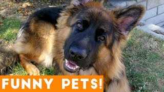 Download Funniest Pets & Animals of the Week Compilation August 2018 | Funny Pet Videos Video