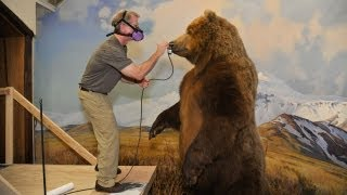 Download Restoring Dioramas in Hall of North American Mammals Video