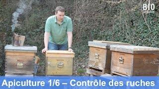 Download L'apiculture bio au cours de l'année – Contrôle des ruches (partie 1/6) Video
