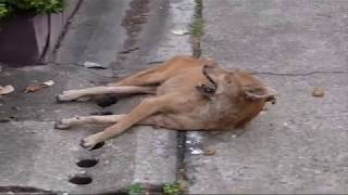 Download WARNING - MAY BE UPSETTING - Rabid Dog Video