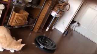 Download iRobotルンバ880の開封から起動までー猫が絡む【♀猫こむぎ&♂猫だいず】 Video
