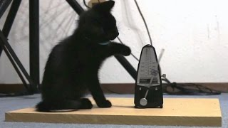 Download Cats vs. Metronomes Compilation Video