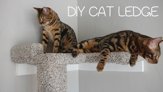 Download DIY Cat Ledge Video