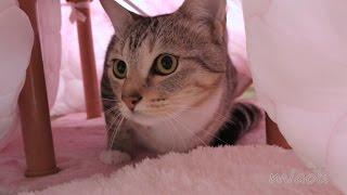 Download 猫用 夢こたつをかった Cat only I bought a kotatsu 【瀬戸の三毛猫日記】 Video