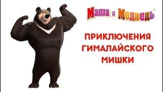 Download Маша и Медведь - Приключения Гималайского Мишки 🐻 Все серии подряд! 🎬 Video