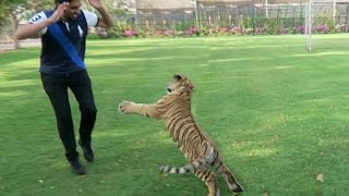 Download ATTACKED BY A TIGER !!! Video